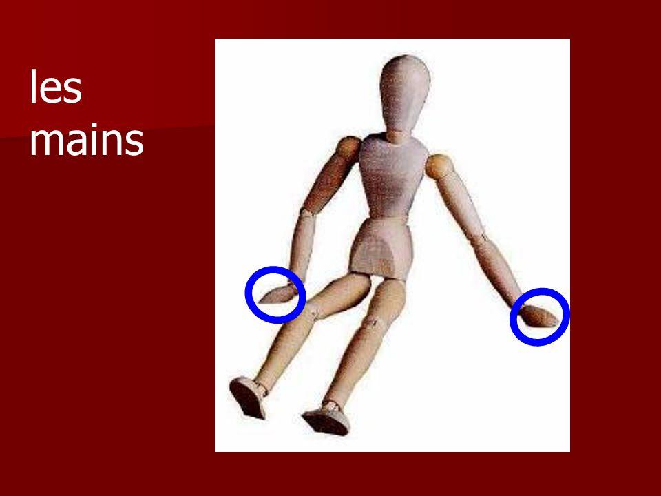 Ce sont les bras ou les épaules?