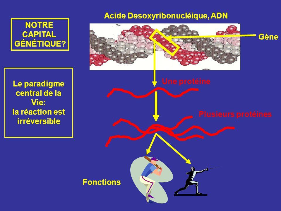 Acide Desoxyribonucléique, ADN Gène Une protéine Fonctions Plusieurs protéines Le paradigme central de la Vie: la réaction est irréversible NOTRE CAPI