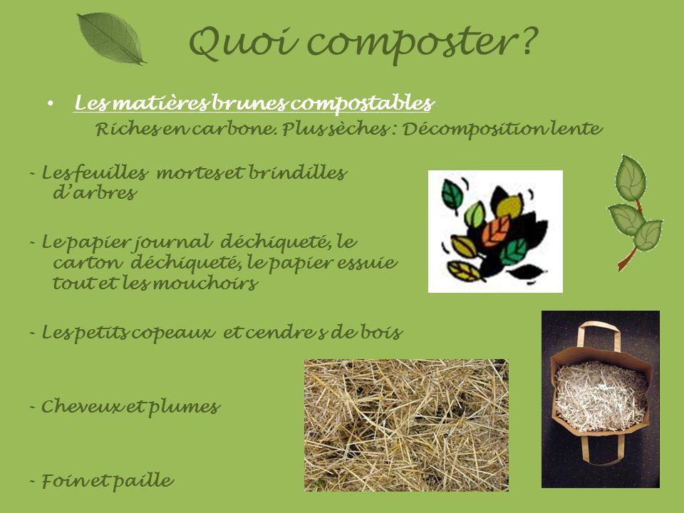 Quoi composter? Les matières brunes compostables Riches en carbone. Plus sèches : Décomposition lente - Les feuilles mortes et brindilles darbres - Le
