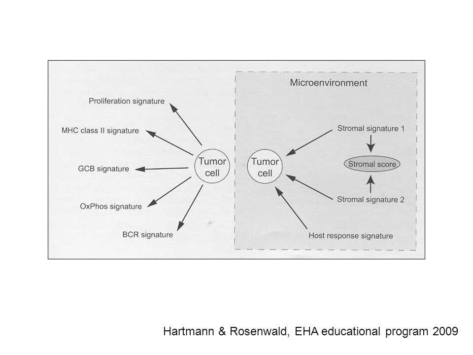 Hartmann & Rosenwald, EHA educational program 2009