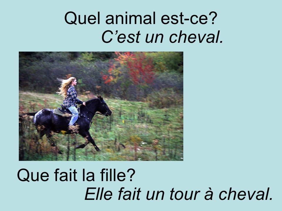 Quel animal est-ce Cest un cheval. Que fait la fille Elle fait un tour à cheval.