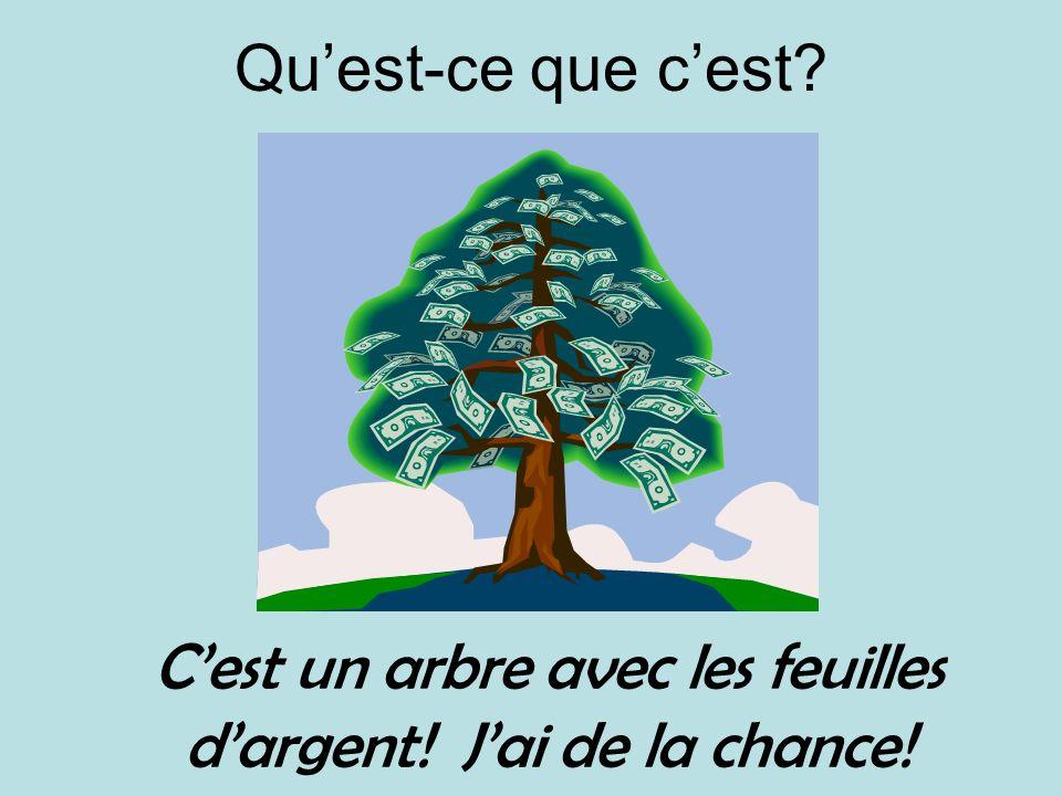 Quest-ce que cest? Cest un arbre avec les feuilles dargent! Jai de la chance!