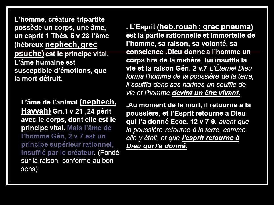 Lhomme, créature tripartite possède un corps, une âme, un esprit 1 Thés. 5 v 23 lâme (hébreux nephech, grec psuche) est le principe vital. Lâme humain