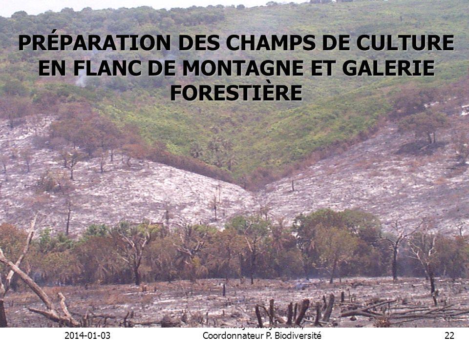 2014-01-03 Elhadj Maadjou BAH, Coordonnateur P. Biodiversité22 PRÉPARATION DES CHAMPS DE CULTURE EN FLANC DE MONTAGNE ET GALERIE FORESTIÈRE