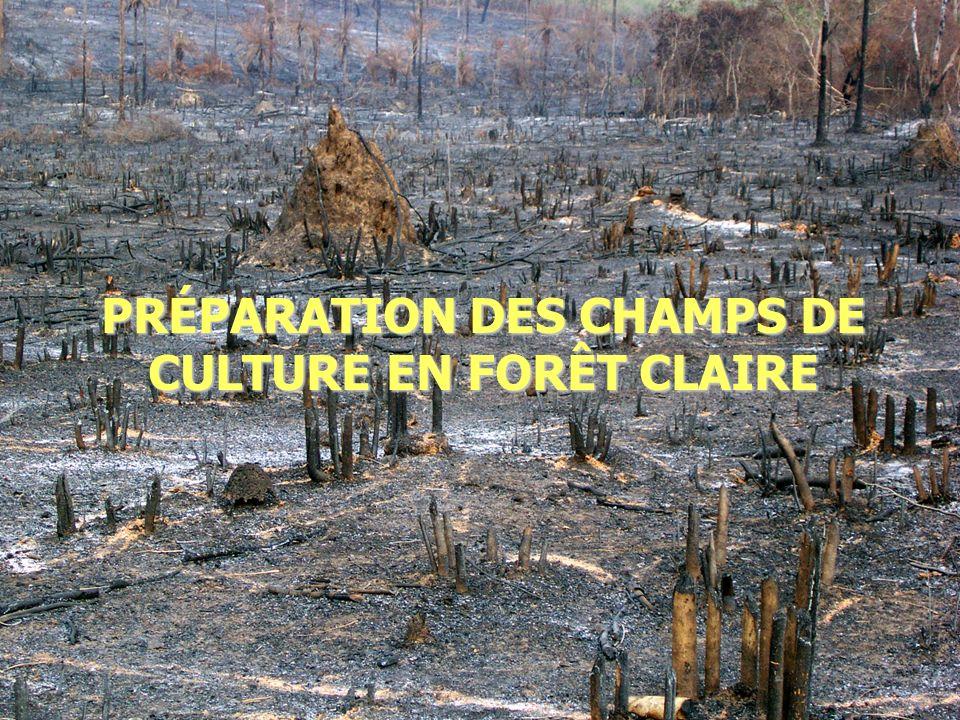 2014-01-03 Elhadj Maadjou BAH, Coordonnateur P. Biodiversité23 PRÉPARATION DES CHAMPS DE CULTURE EN FORÊT CLAIRE