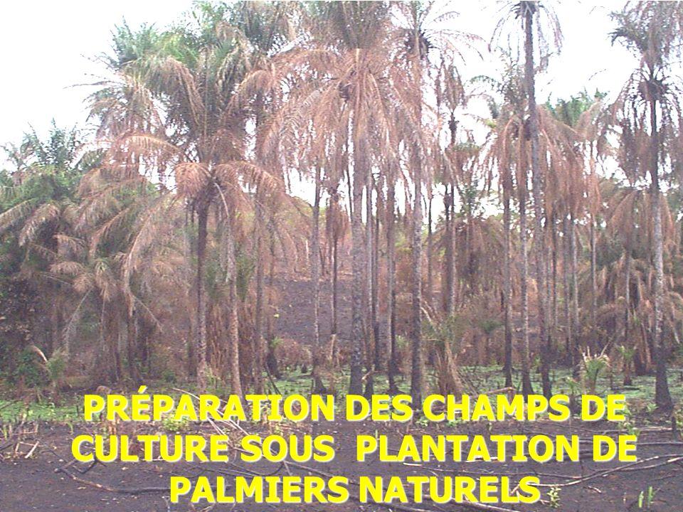 2014-01-03 Elhadj Maadjou BAH, Coordonnateur P. Biodiversité24 PRÉPARATION DES CHAMPS DE CULTURE SOUS PLANTATION DE PALMIERS NATURELS