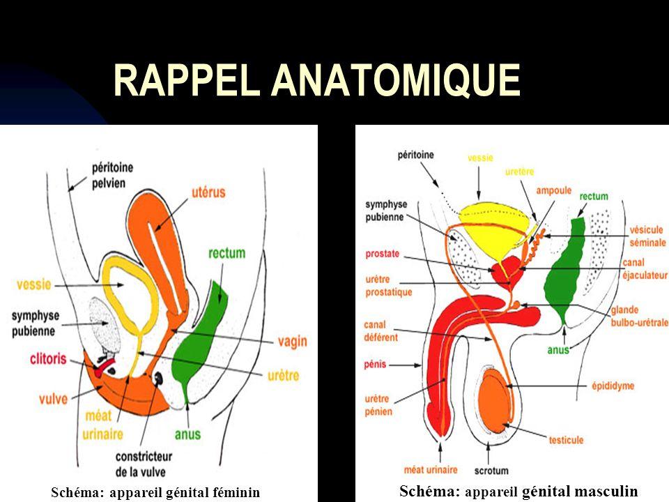 Urétrite gonococcique Urétrite à Chlamydia