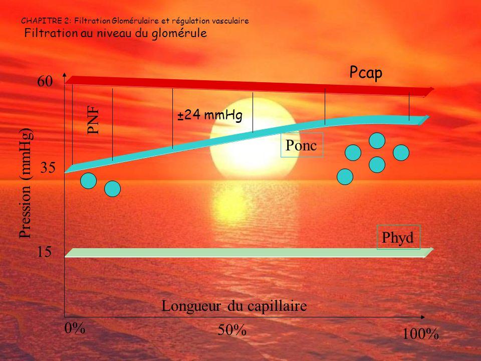 CHAPITRE 2: Filtration Glomérulaire et régulation vasculaire Filtration au niveau du glomérule PNF 15 35 60 Pression (mmHg) 0% 50% 100% Longueur du ca
