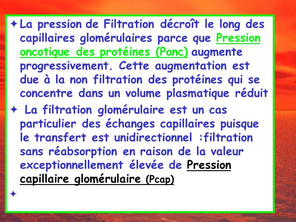 La pression de Filtration décroît le long des capillaires glomérulaires parce que Pression oncotique des protéines (Ponc) augmente progressivement. Ce