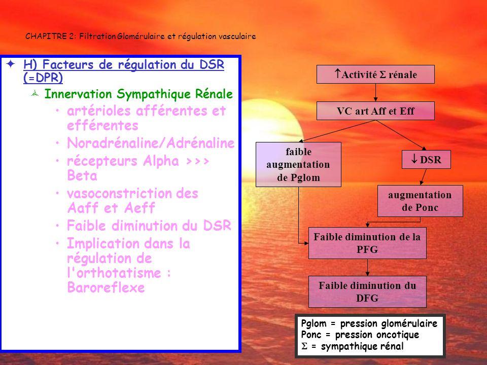 CHAPITRE 2: Filtration Glomérulaire et régulation vasculaire H) Facteurs de régulation du DSR (=DPR) Innervation Sympathique Rénale artérioles afféren