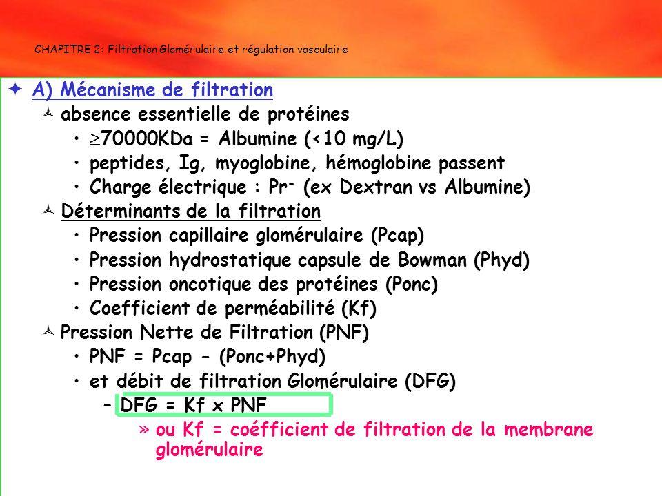 CHAPITRE 2: Filtration Glomérulaire et régulation vasculaire A) Mécanisme de filtration absence essentielle de protéines 70000KDa = Albumine (<10 mg/L