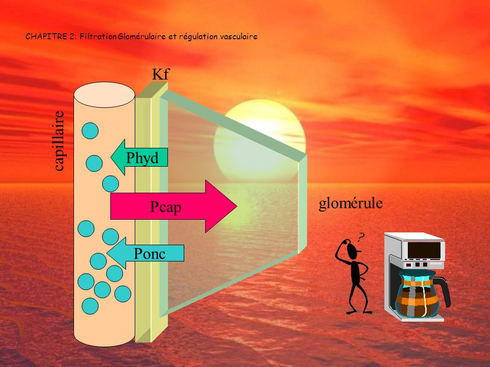 CHAPITRE 2: Filtration Glomérulaire et régulation vasculaire Pcap Phyd Ponc Kf glomérule capillaire