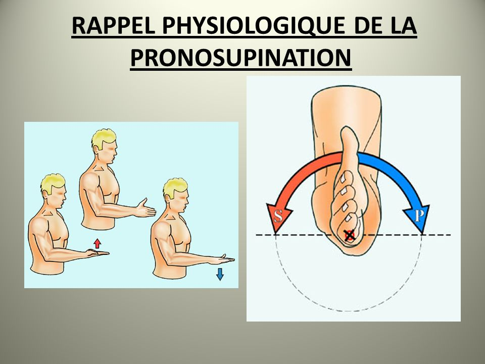 RAPPEL PHYSIOLOGIQUE DE LA PRONOSUPINATION