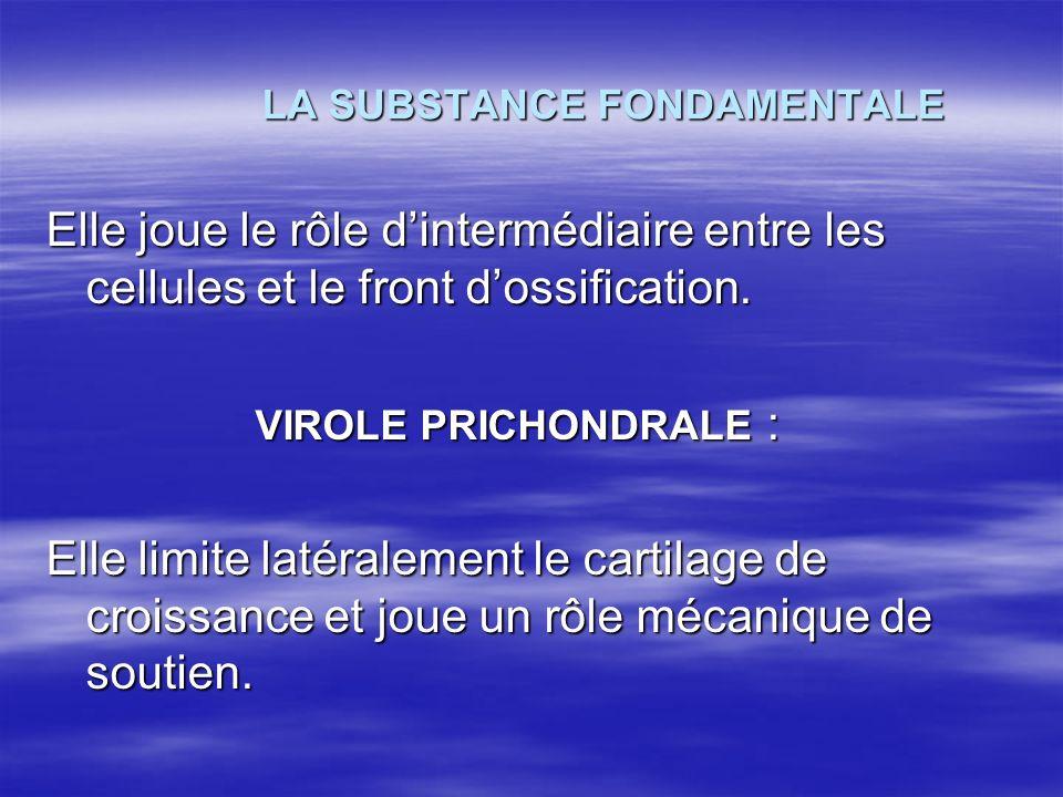 LA SUBSTANCE FONDAMENTALE LA SUBSTANCE FONDAMENTALE Elle joue le rôle dintermédiaire entre les cellules et le front dossification. VIROLE PRICHONDRALE