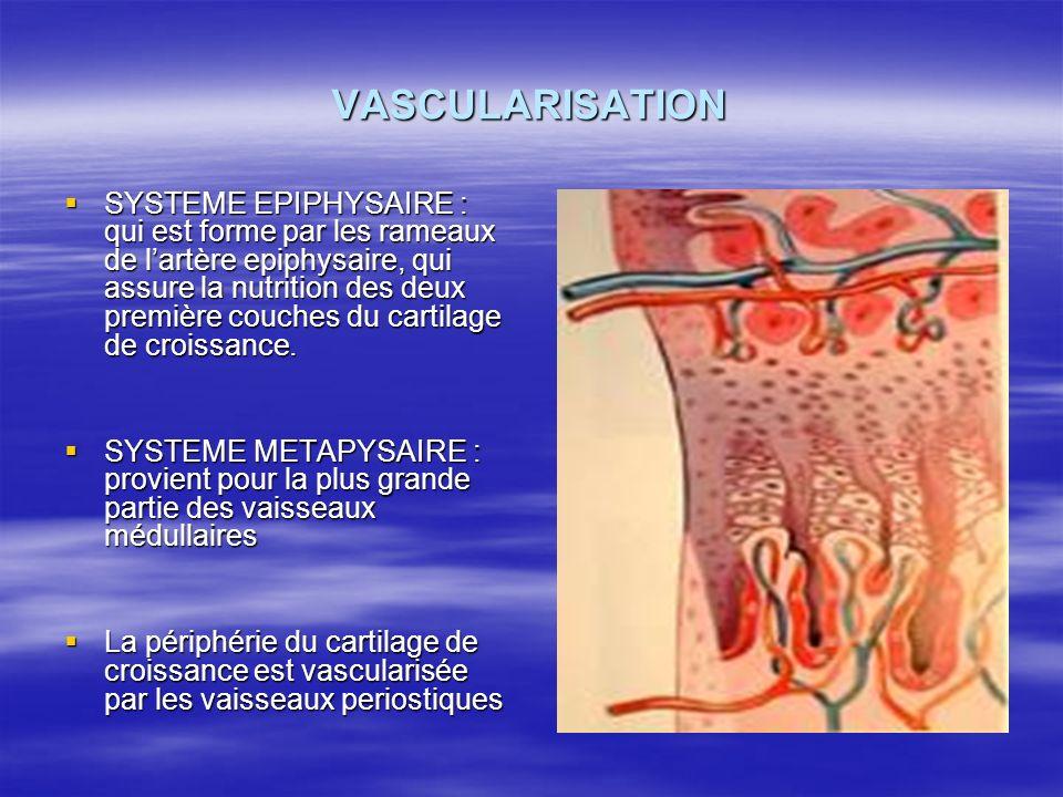 VASCULARISATION SYSTEME EPIPHYSAIRE : qui est forme par les rameaux de lartère epiphysaire, qui assure la nutrition des deux première couches du carti