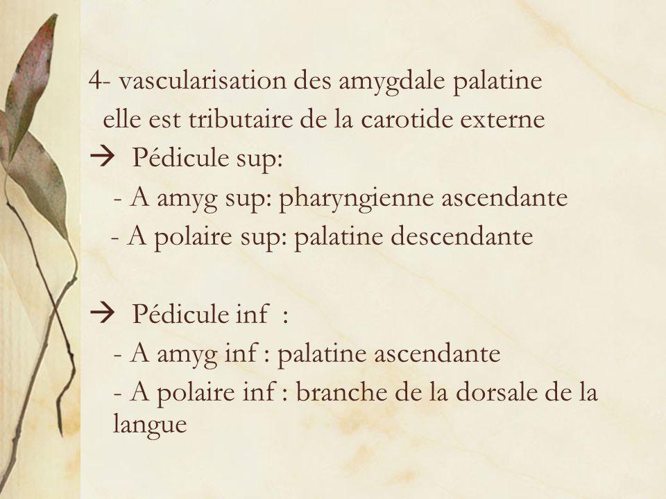 4- vascularisation des amygdale palatine elle est tributaire de la carotide externe Pédicule sup: - A amyg sup: pharyngienne ascendante - A polaire su