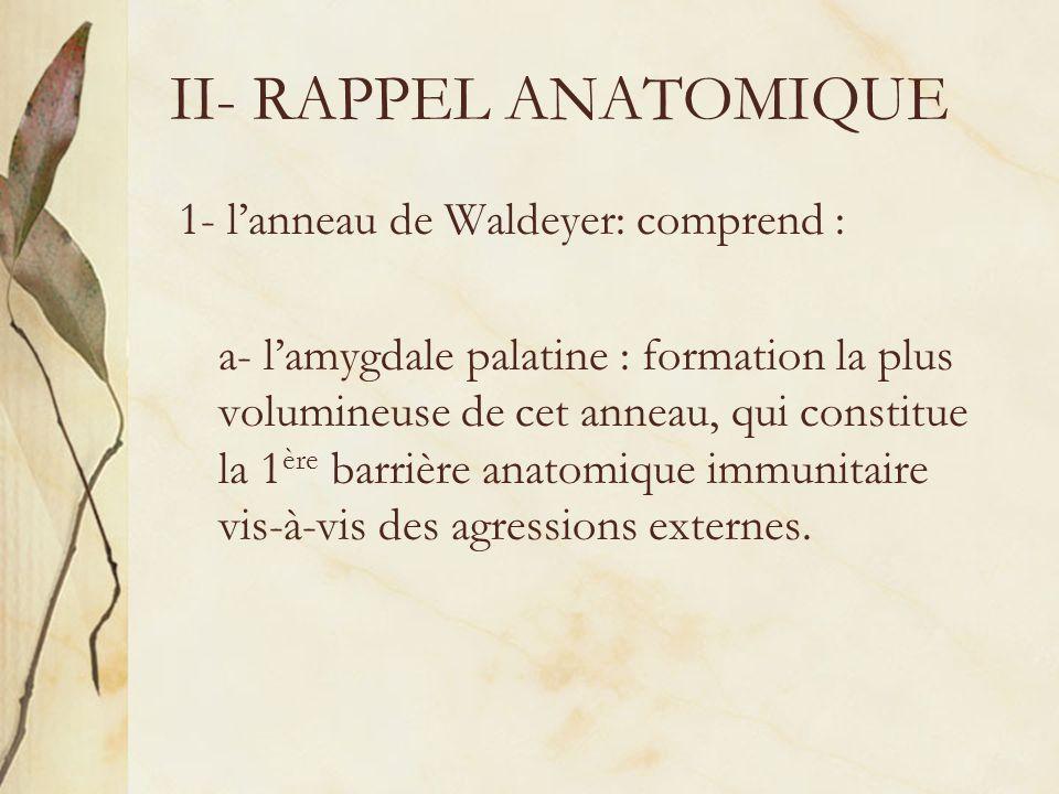 II- RAPPEL ANATOMIQUE 1- lanneau de Waldeyer: comprend : a- lamygdale palatine : formation la plus volumineuse de cet anneau, qui constitue la 1 ère b