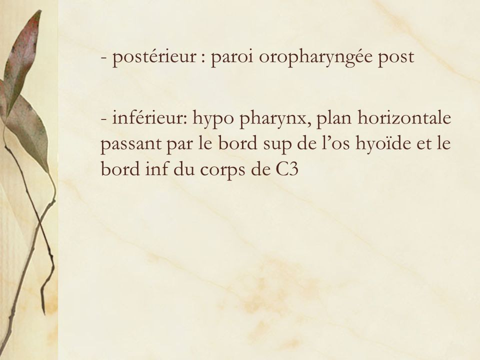 - postérieur : paroi oropharyngée post - inférieur: hypo pharynx, plan horizontale passant par le bord sup de los hyoïde et le bord inf du corps de C3