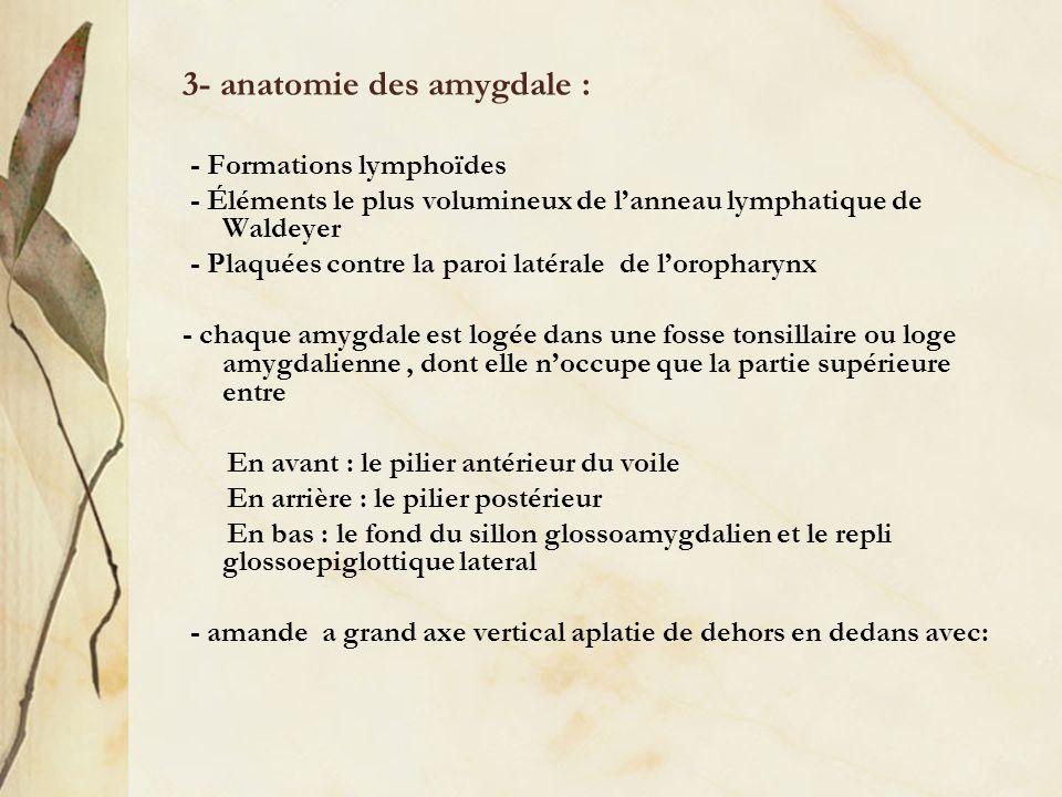 3- anatomie des amygdale : - Formations lymphoïdes - Éléments le plus volumineux de lanneau lymphatique de Waldeyer - Plaquées contre la paroi latéral