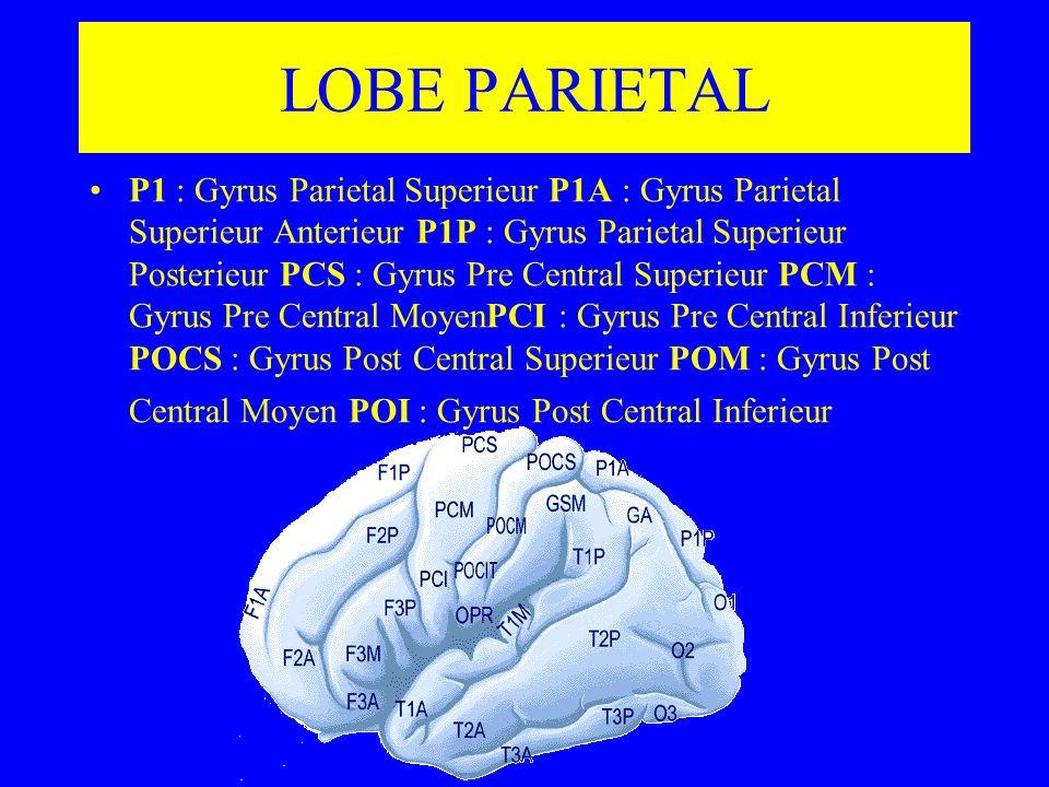 LOBE PARIETAL P1 : Gyrus Parietal Superieur P1A : Gyrus Parietal Superieur Anterieur P1P : Gyrus Parietal Superieur Posterieur PCS : Gyrus Pre Central