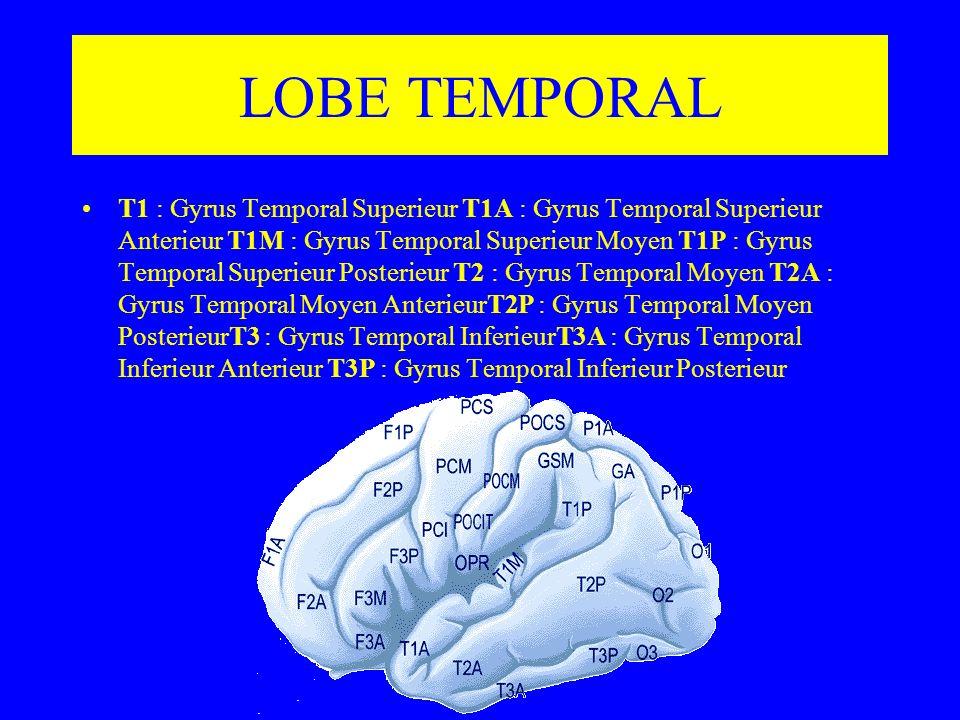 LOBE TEMPORAL T1 : Gyrus Temporal Superieur T1A : Gyrus Temporal Superieur Anterieur T1M : Gyrus Temporal Superieur Moyen T1P : Gyrus Temporal Superie