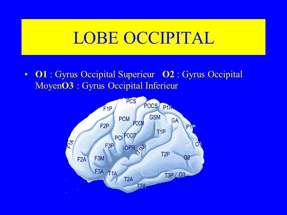 LOBE OCCIPITAL O1 : Gyrus Occipital Superieur O2 : Gyrus Occipital MoyenO3 : Gyrus Occipital Inferieur