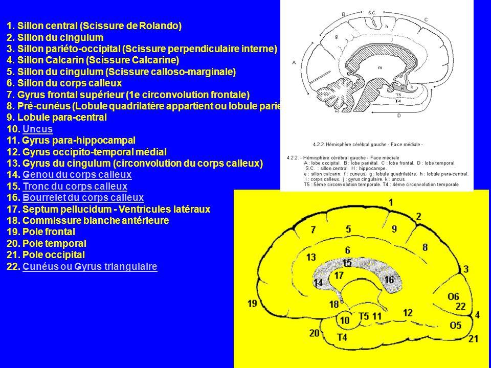 1. Sillon central (Scissure de Rolando) 2. Sillon du cingulum 3. Sillon pariéto-occipital (Scissure perpendiculaire interne) 4. Sillon Calcarin (Sciss