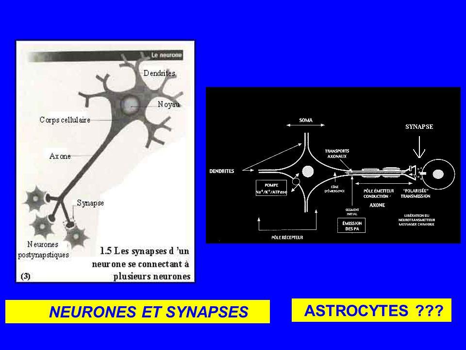 NEURONES ET SYNAPSES ASTROCYTES ???