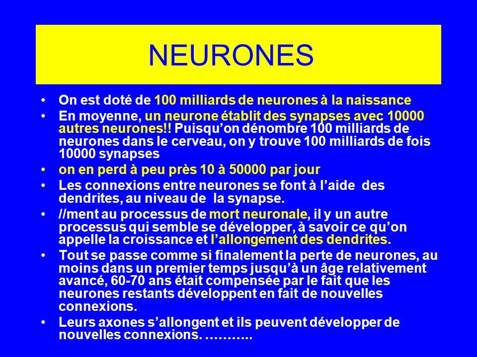 NEURONES On est doté de 100 milliards de neurones à la naissance En moyenne, un neurone établit des synapses avec 10000 autres neurones!! Puisquon dén