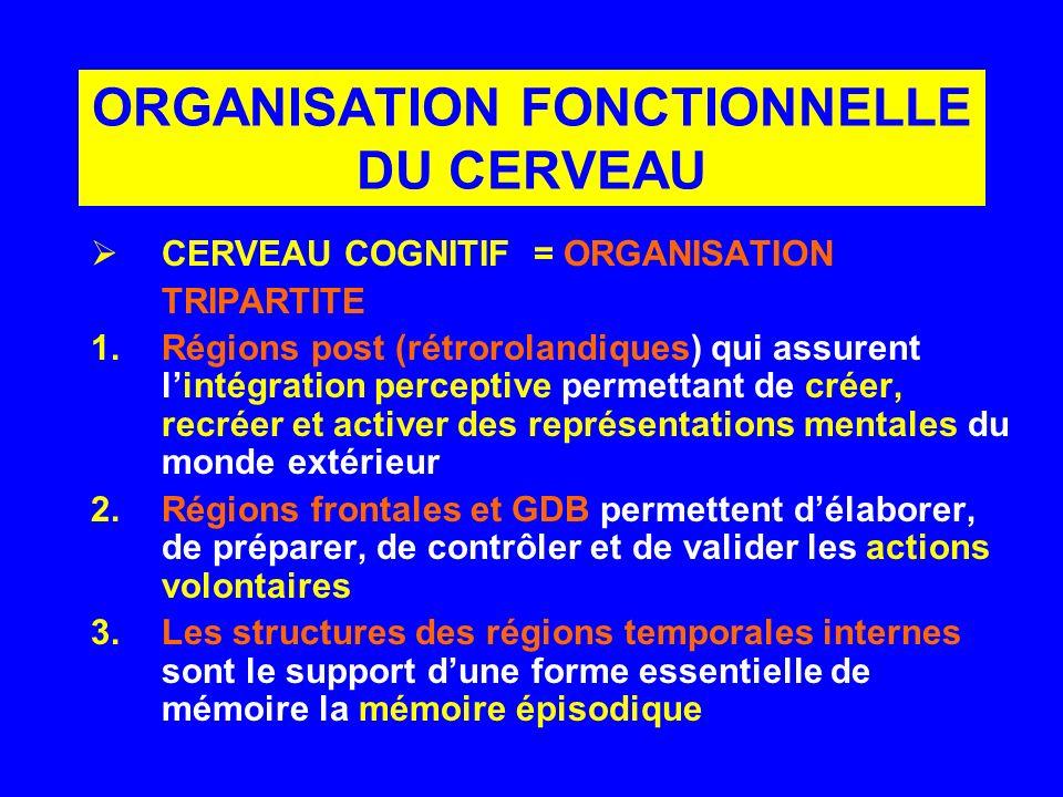 CERVEAU COGNITIF = ORGANISATION TRIPARTITE 1.Régions post (rétrorolandiques) qui assurent lintégration perceptive permettant de créer, recréer et acti