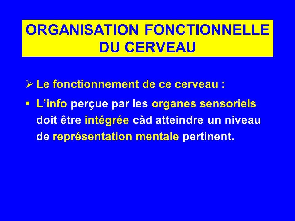 ORGANISATION FONCTIONNELLE DU CERVEAU Le fonctionnement de ce cerveau : Linfo perçue par les organes sensoriels doit être intégrée càd atteindre un ni