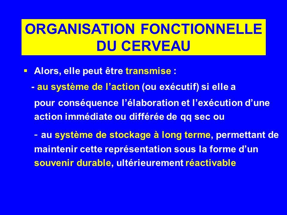 ORGANISATION FONCTIONNELLE DU CERVEAU Alors, elle peut être transmise : - au système de laction (ou exécutif) si elle a pour conséquence lélaboration