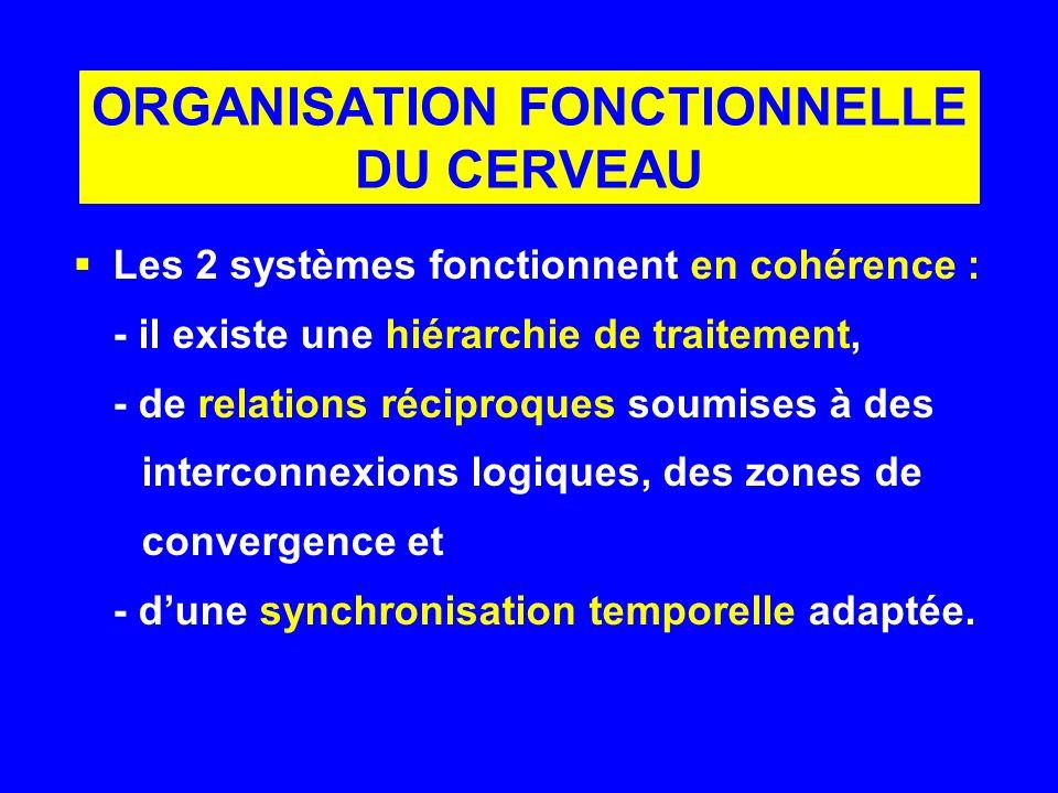 ORGANISATION FONCTIONNELLE DU CERVEAU Les 2 systèmes fonctionnent en cohérence : - il existe une hiérarchie de traitement, - de relations réciproques