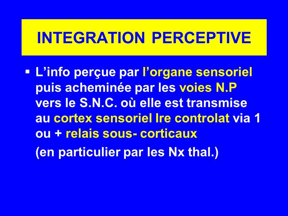 INTEGRATION PERCEPTIVE Linfo perçue par lorgane sensoriel puis acheminée par les voies N.P vers le S.N.C. où elle est transmise au cortex sensoriel Ir