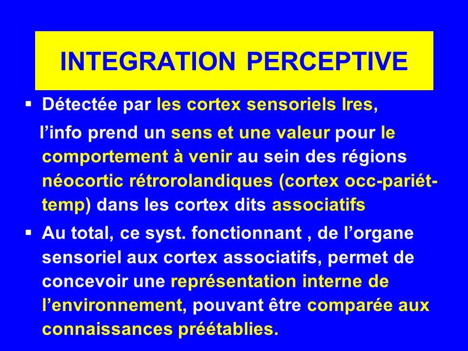 INTEGRATION PERCEPTIVE Détectée par les cortex sensoriels Ires, linfo prend un sens et une valeur pour le comportement à venir au sein des régions néo