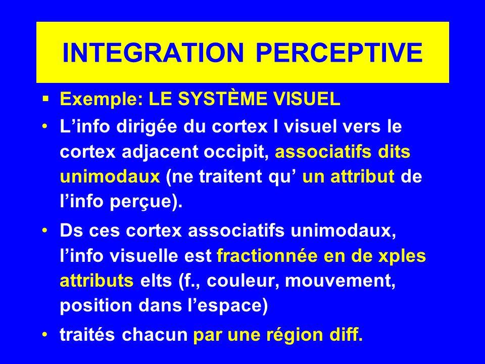 INTEGRATION PERCEPTIVE Exemple: LE SYSTÈME VISUEL Linfo dirigée du cortex I visuel vers le cortex adjacent occipit, associatifs dits unimodaux (ne tra