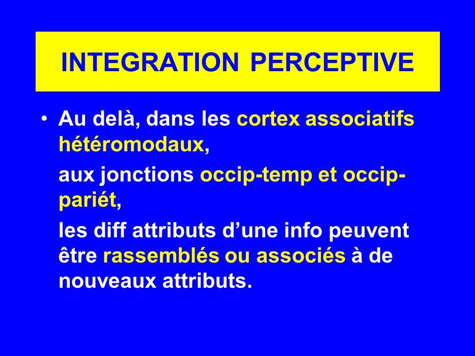INTEGRATION PERCEPTIVE Au delà, dans les cortex associatifs hétéromodaux, aux jonctions occip-temp et occip- pariét, les diff attributs dune info peuv