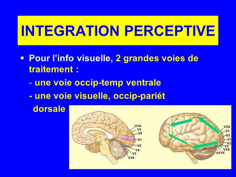 INTEGRATION PERCEPTIVE Pour linfo visuelle, 2 grandes voies de traitement : - une voie occip-temp ventrale - une voie visuelle, occip-pariét dorsale