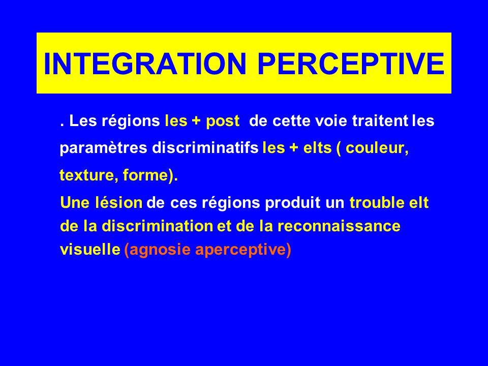INTEGRATION PERCEPTIVE. Les régions les + post de cette voie traitent les paramètres discriminatifs les + elts ( couleur, texture, forme). Une lésion