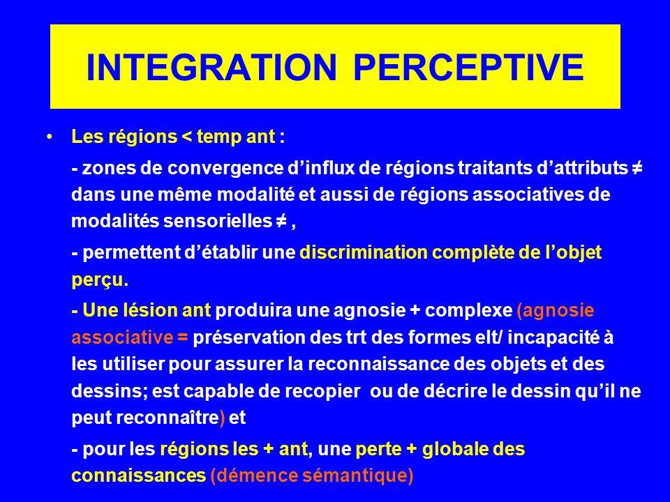 INTEGRATION PERCEPTIVE Les régions < temp ant : - zones de convergence dinflux de régions traitants dattributs dans une même modalité et aussi de régi
