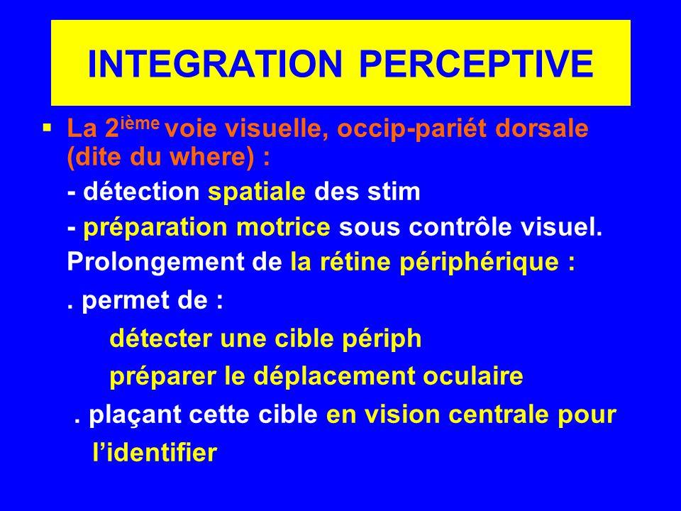 INTEGRATION PERCEPTIVE La 2 ième voie visuelle, occip-pariét dorsale (dite du where) : - détection spatiale des stim - préparation motrice sous contrô