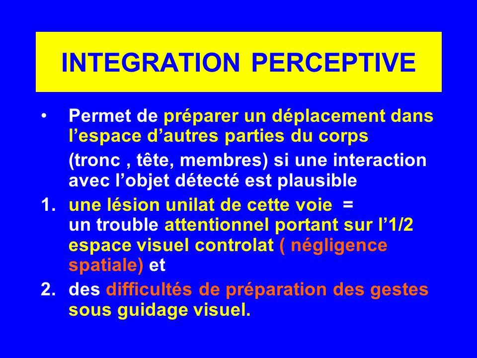 INTEGRATION PERCEPTIVE Permet de préparer un déplacement dans lespace dautres parties du corps (tronc, tête, membres) si une interaction avec lobjet d