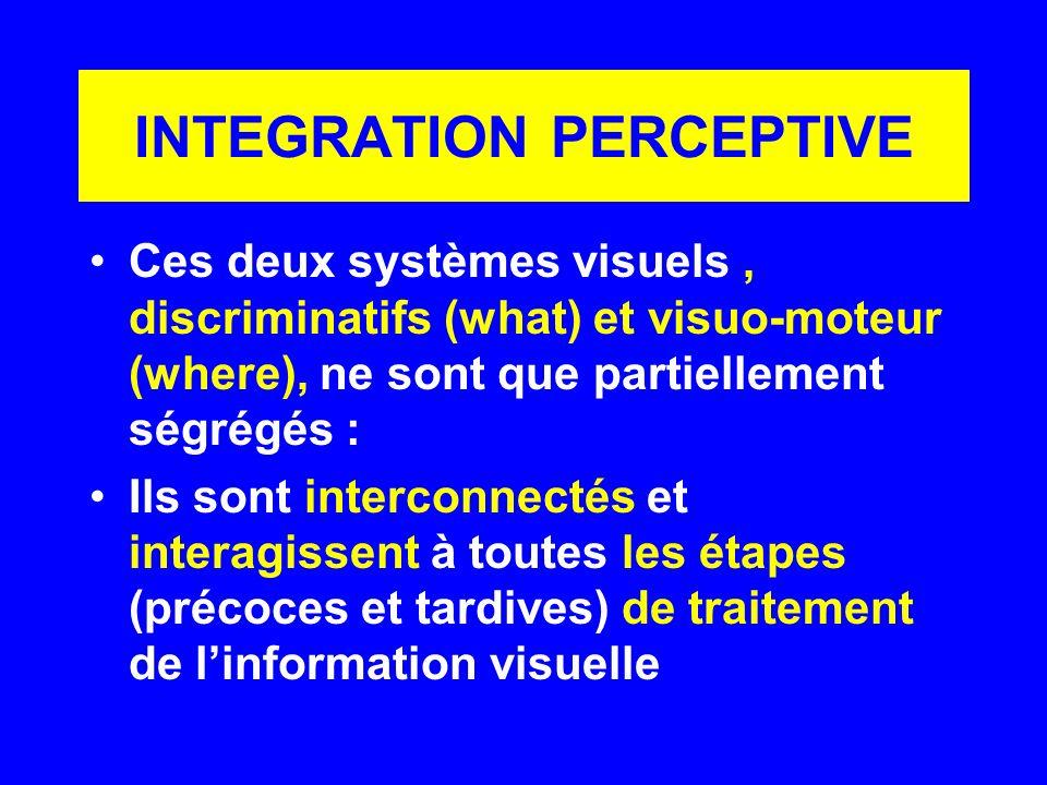 INTEGRATION PERCEPTIVE Ces deux systèmes visuels, discriminatifs (what) et visuo-moteur (where), ne sont que partiellement ségrégés : Ils sont interco