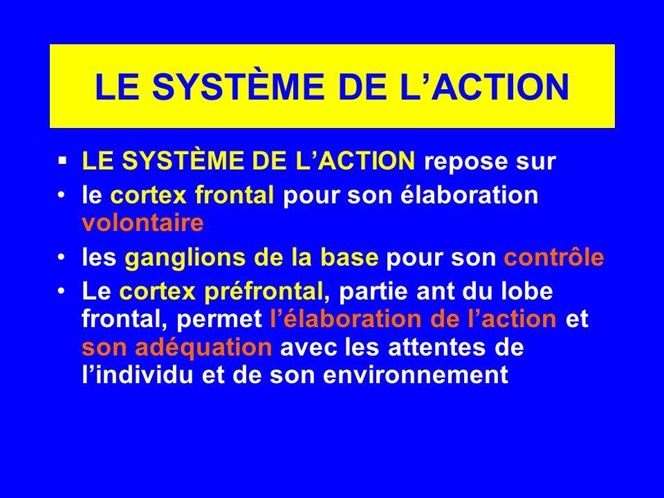 LE SYSTÈME DE LACTION LE SYSTÈME DE LACTION repose sur le cortex frontal pour son élaboration volontaire les ganglions de la base pour son contrôle Le