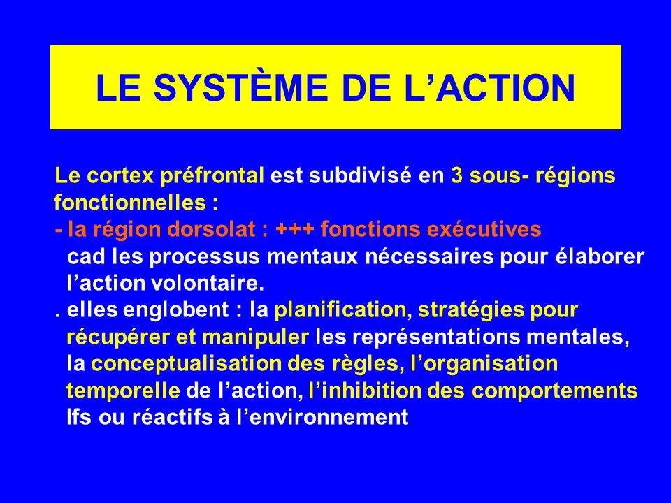 LE SYSTÈME DE LACTION Le cortex préfrontal est subdivisé en 3 sous- régions fonctionnelles : - la région dorsolat : +++ fonctions exécutives cad les p