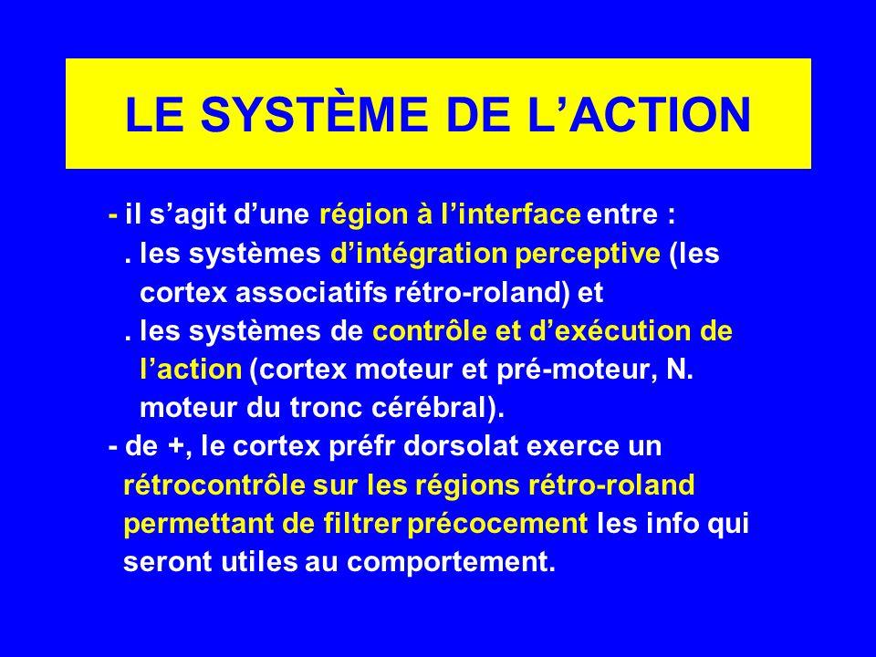 LE SYSTÈME DE LACTION - il sagit dune région à linterface entre :. les systèmes dintégration perceptive (les cortex associatifs rétro-roland) et. les