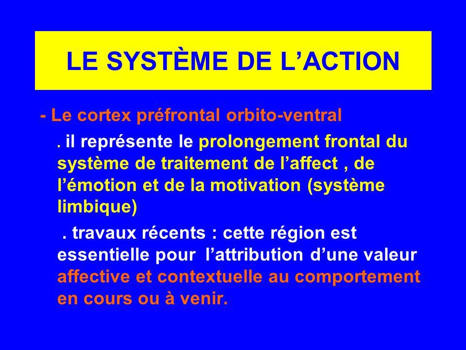LE SYSTÈME DE LACTION - Le cortex préfrontal orbito-ventral. il représente le prolongement frontal du système de traitement de laffect, de lémotion et