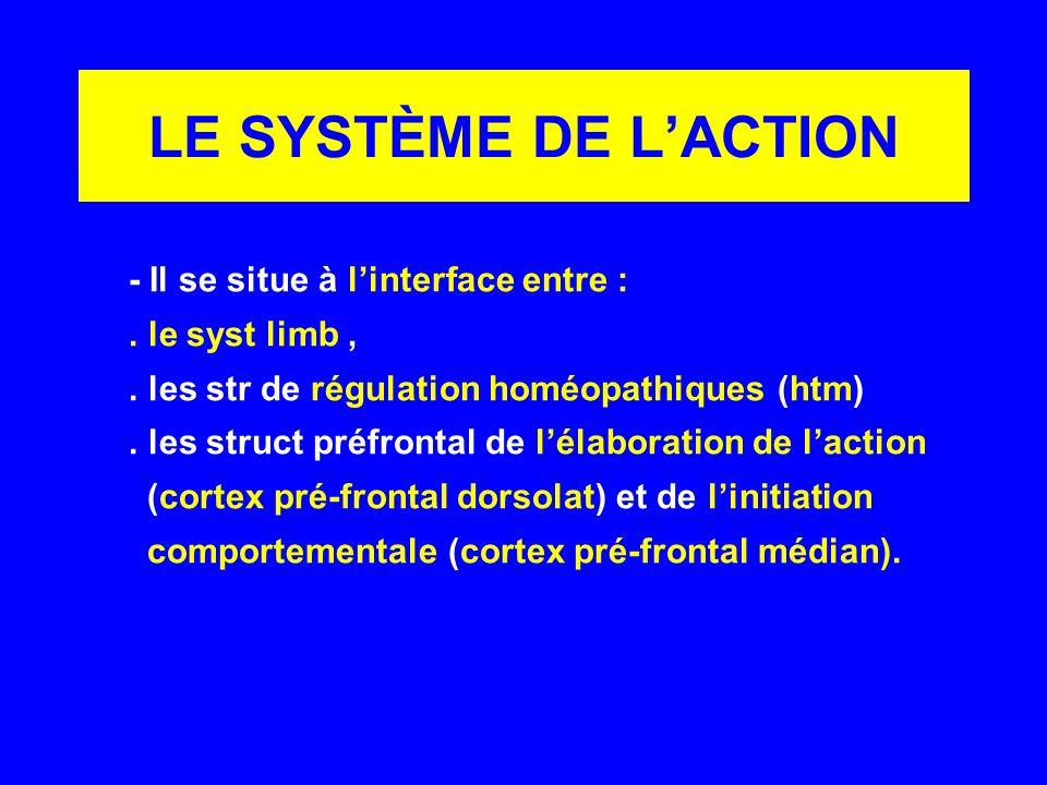 LE SYSTÈME DE LACTION - Il se situe à linterface entre :. le syst limb,. les str de régulation homéopathiques (htm). les struct préfrontal de lélabora