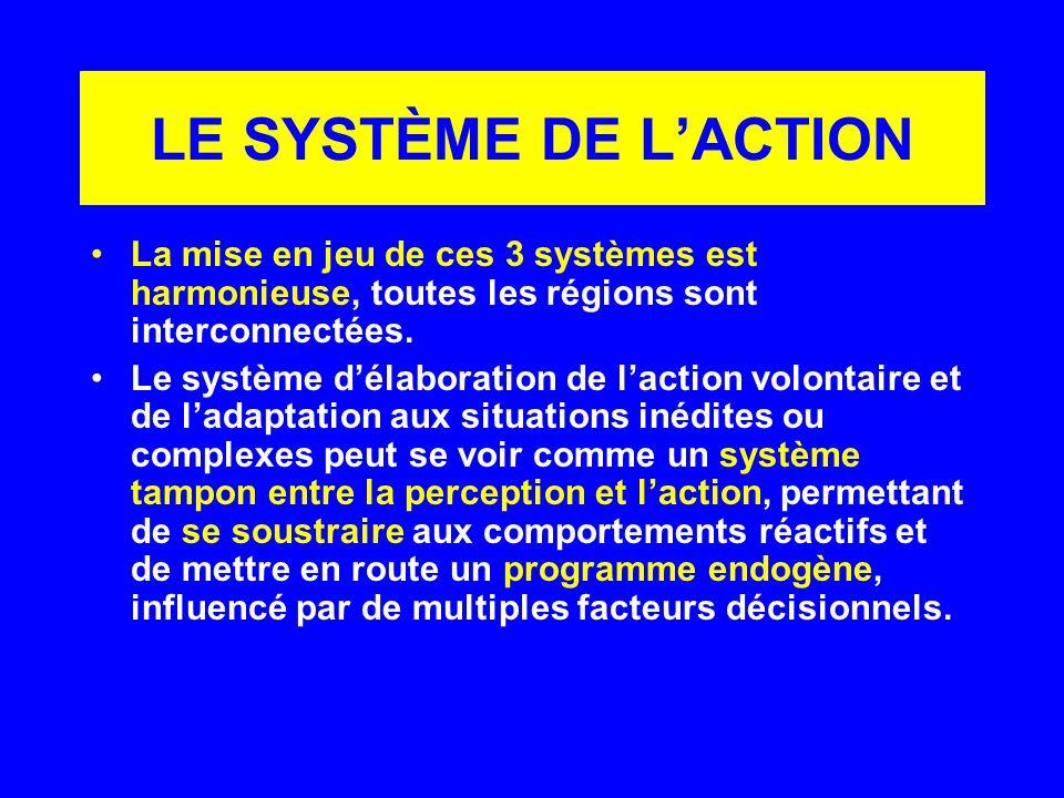 LE SYSTÈME DE LACTION La mise en jeu de ces 3 systèmes est harmonieuse, toutes les régions sont interconnectées. Le système délaboration de laction vo
