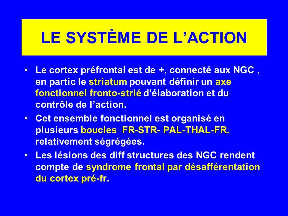 LE SYSTÈME DE LACTION Le cortex préfrontal est de +, connecté aux NGC, en partic le striatum pouvant définir un axe fonctionnel fronto-strié délaborat